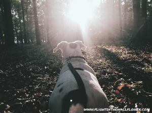 finn hike